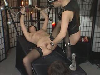 Captured cougars get punished